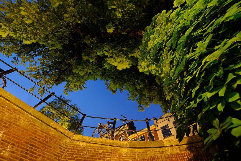 De Vollersbrug over de Oudegracht in Utrecht met begroeide boom van Donker Utrecht