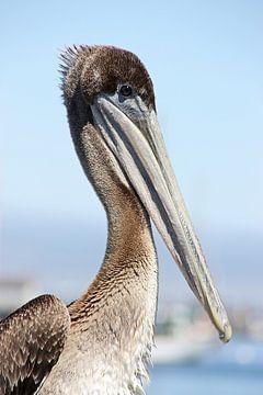 proud pelican von Meleah Fotografie