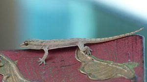 Gekko - Gecko van