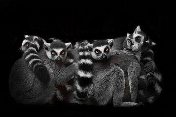 Eine Menge Katzenlemuren versammelten sich auf einem Haufen, um eine Nacht lang zu schlafen, unruhig von Michael Semenov