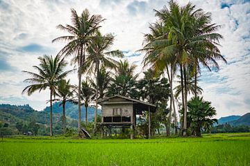 Slaaphut in het rijstveld, Laos van Rietje Bulthuis