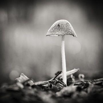 Herfst in Nederland von Hans Lunenburg