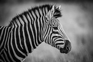 Zebra von Marcel Out