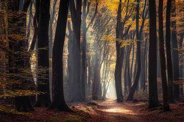Autumn in the Dutch Forest sur Edwin Mooijaart