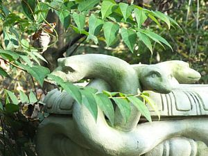 Schlangen von