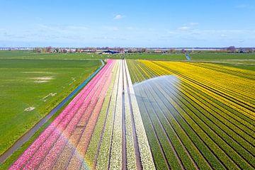 Luchtfoto van bollenvelden in de Bollenstreek in Nederland van Nisangha Masselink