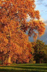 Kleurrijke herfstboom van Heike Hultsch