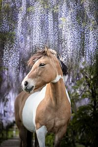 Paard onder de blauwe regen van Daliyah BenHaim