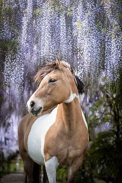 Pferd unter der Glyzinie von Daliyah BenHaim