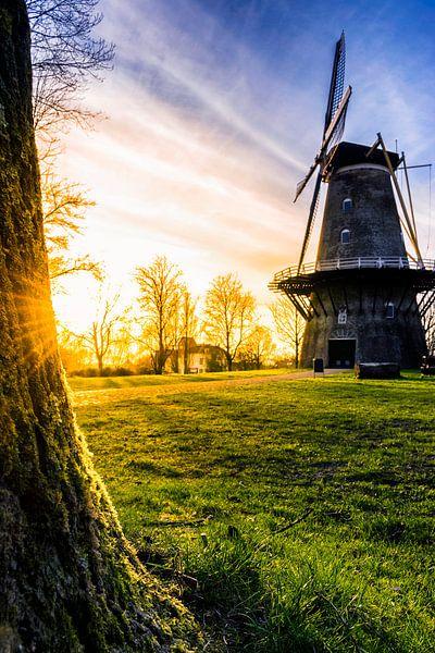 Spring Sun van Thom Brouwer