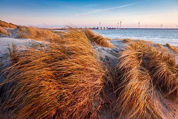 helmgras duinen Burgh - Haamstede van Eugene Winthagen