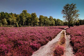 Lüneburger Heide von Kurt Krause