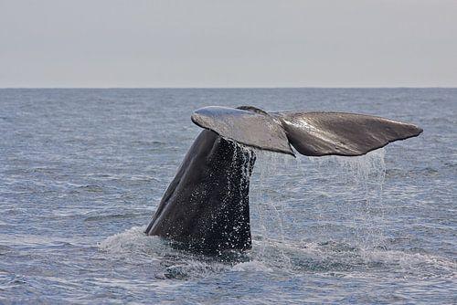 Walvis von Thijs Schouten
