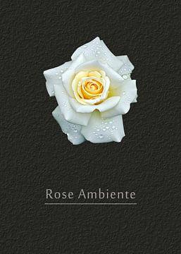 Rose Ambiente von Leopold Brix