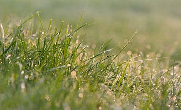 Waterdalingen op grassprietjes in het zonlicht in de ochtend van Edith Albuschat