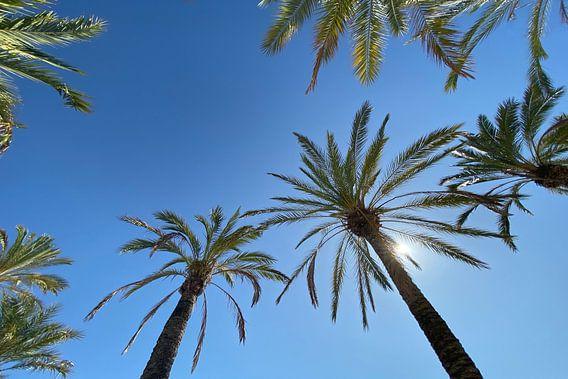 Sonnige Palmen