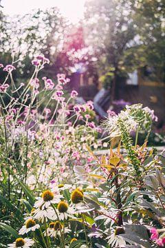 Blumen und Sonnenlicht von Patrycja Polechonska