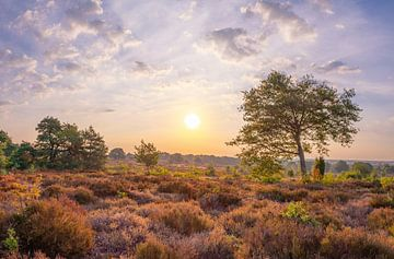 Nationaal Park Sallandse Heuvelrug, Overijssel von Domenique van der Horst