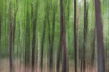 bomen in het groen van Tania Perneel