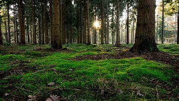 Moos im Wald von Kenji Elzerman