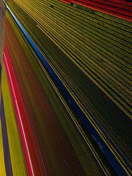 Tulpenfelder aus der Luft von Saranda Hofstra