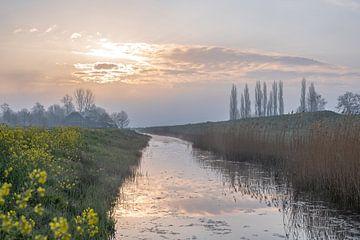 raapzaad langs het water van Tania Perneel