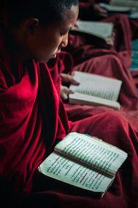 Jonge boeddhistische monnik die studeert