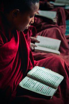 Junger buddhistischer Mönch studiert von Edgar Bonnet-behar