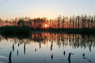 Verdronken bos 2 sur Marco van de Pol