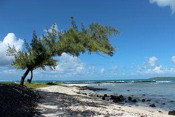 Tropisch strand met boom van