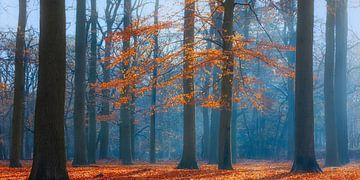 Herbstmorgen im Buchenwald, Utrechtse Heuvelrug, Niederlande von Sjaak den Breeje