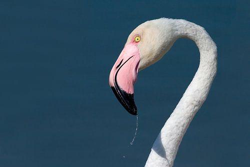 Fresh flamingo van
