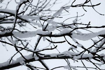 Sneeuw bedolven takken van Jasper van Dijken