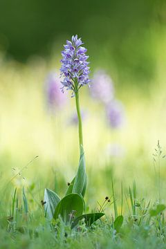 Orchidee von Elbert-Jan Achterberg