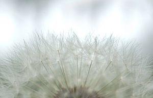 Bloemen 'Soft White' van Greetje van Son