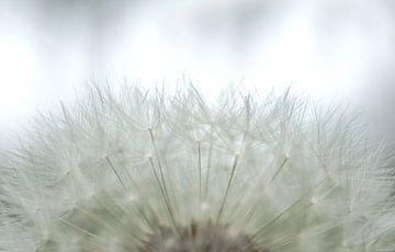 Blumen Weiches Weiß von Greetje van Son