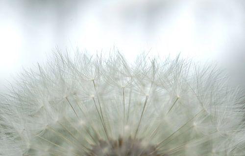 Bloemen 'Soft White' van