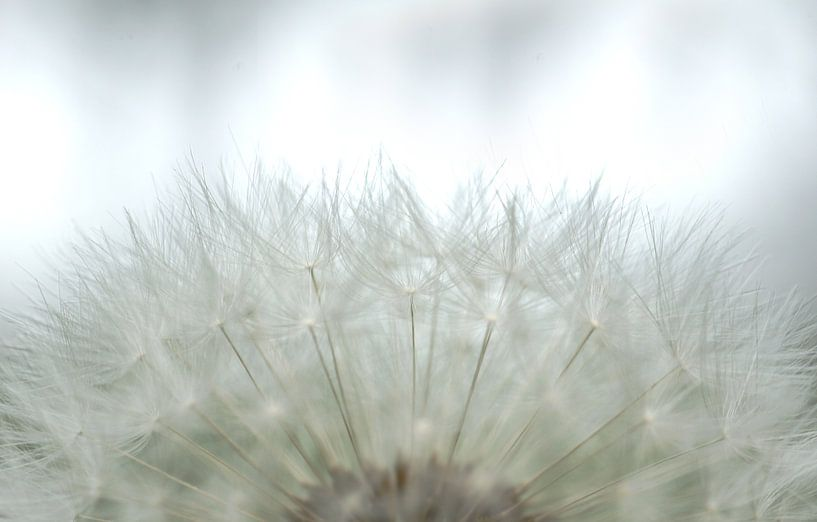 Bloemen 'Soft White' sur Greetje van Son