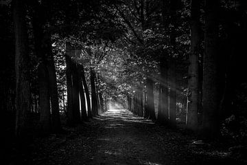Lichtstralen in het Mastbos (zwart-wit) van Fotografie Jeronimo