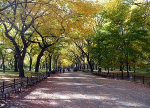 NewYork Central Park van