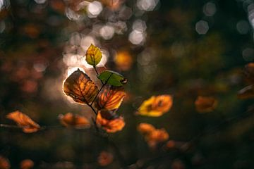Herfstbladeren in het zonlicht van Florian Kunde