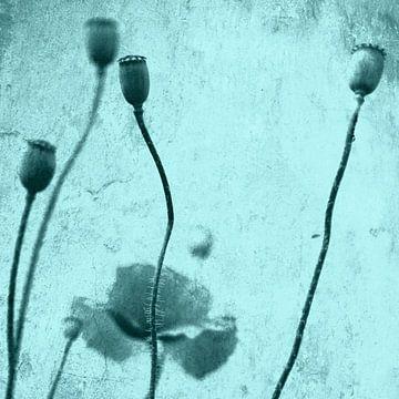 Poppies van Falko Follert