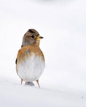 Garder dans la neige sur Pleun Bonekamp
