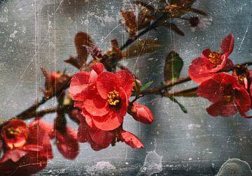 Pfirsichblüten von Silke Reimann