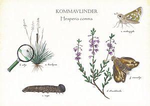 Kommavlinder