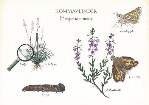 Kommavlinder van Jasper de Ruiter