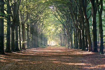 Sunbeams avenue of trees sur Wolf Schouten