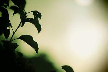 zon of maan met groene gloed van milan willems