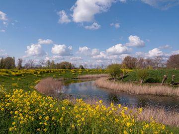 Gelbe Randstreifenblumen bei Fort Everdingen von Robin Jongerden