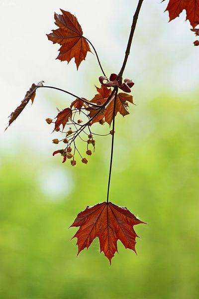 autumn... symphony of leaves von Meleah Fotografie